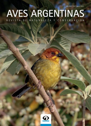 Bird Watching In Lion Country 2010 Pdf