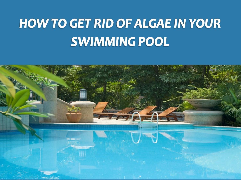 How To Get Rid Of Algae in Your Swimming Pool by RileyGwynne ...