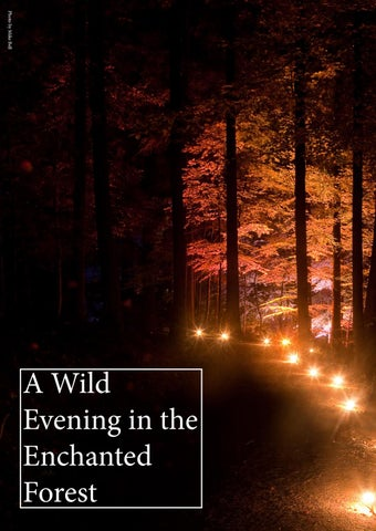 Page 12 of A Wild Evening in the Enchanted Forest