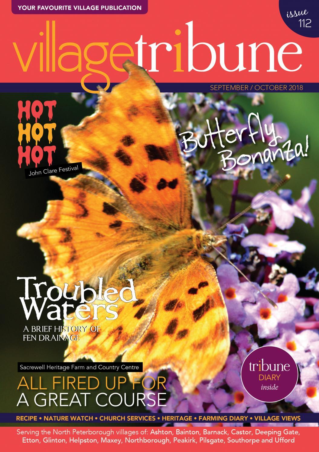 NEW 7 pc BUTTERFLY DIMENSIONAL STICKERS Butterflies Design  STUDIO 112  K /& CO