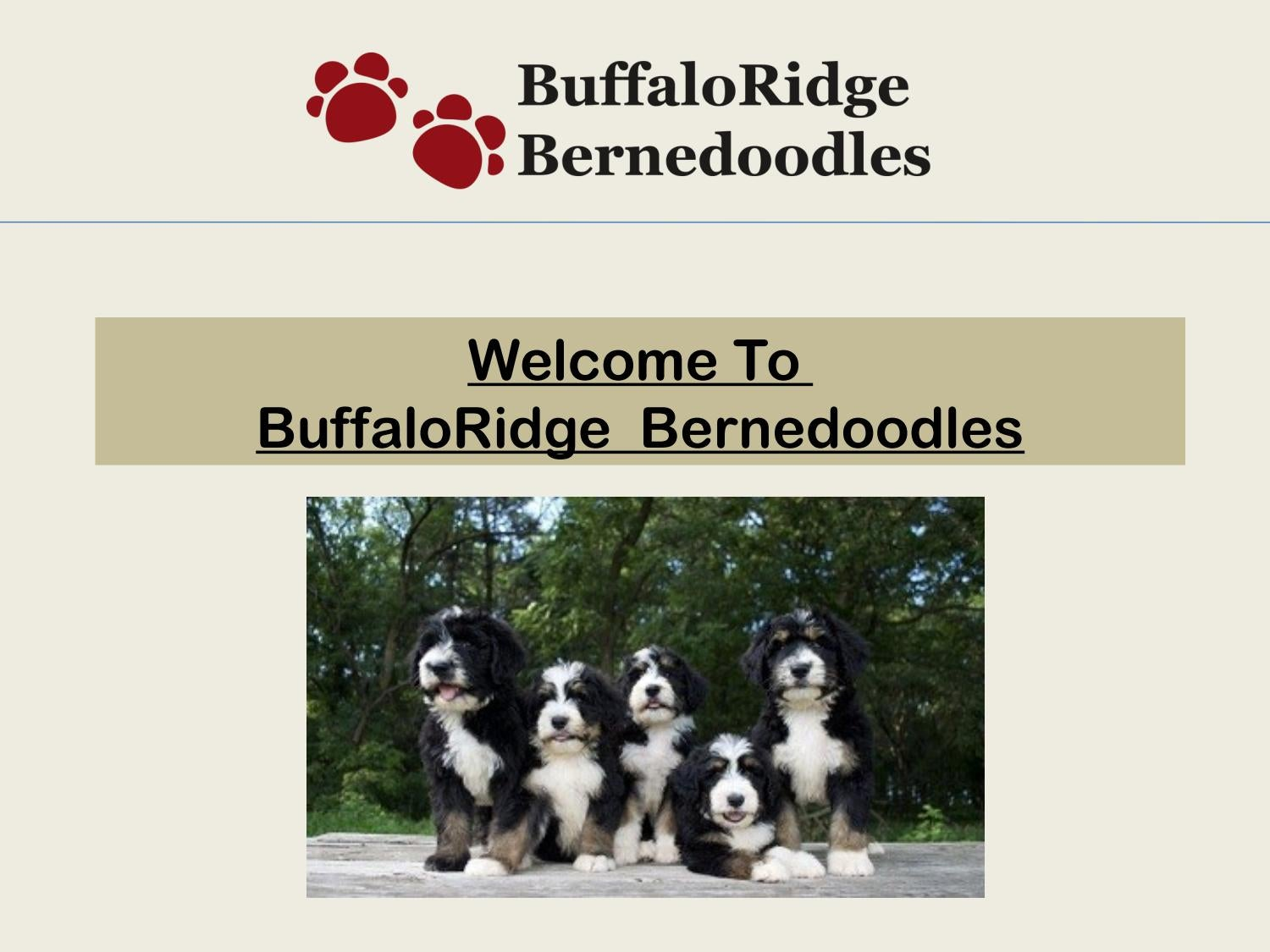 Bernese Mountain Dog Puppies by Steven Butler - issuu