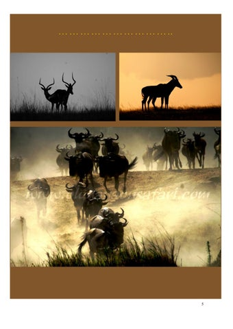 Page 5 of The Wildebeest Migration