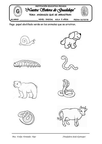Tema Animales Que Se Arrastran By Evelynabejitas Issuu