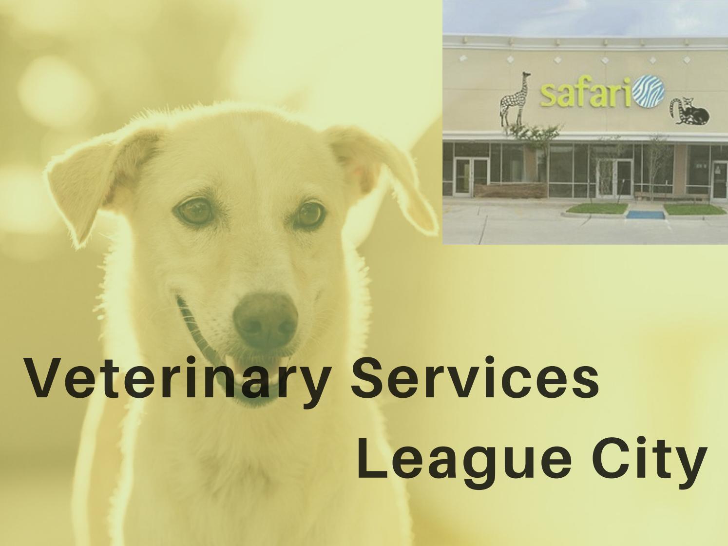 Veterinarians in League City | Safari Veterinary Care Centers, TX - Magazine cover