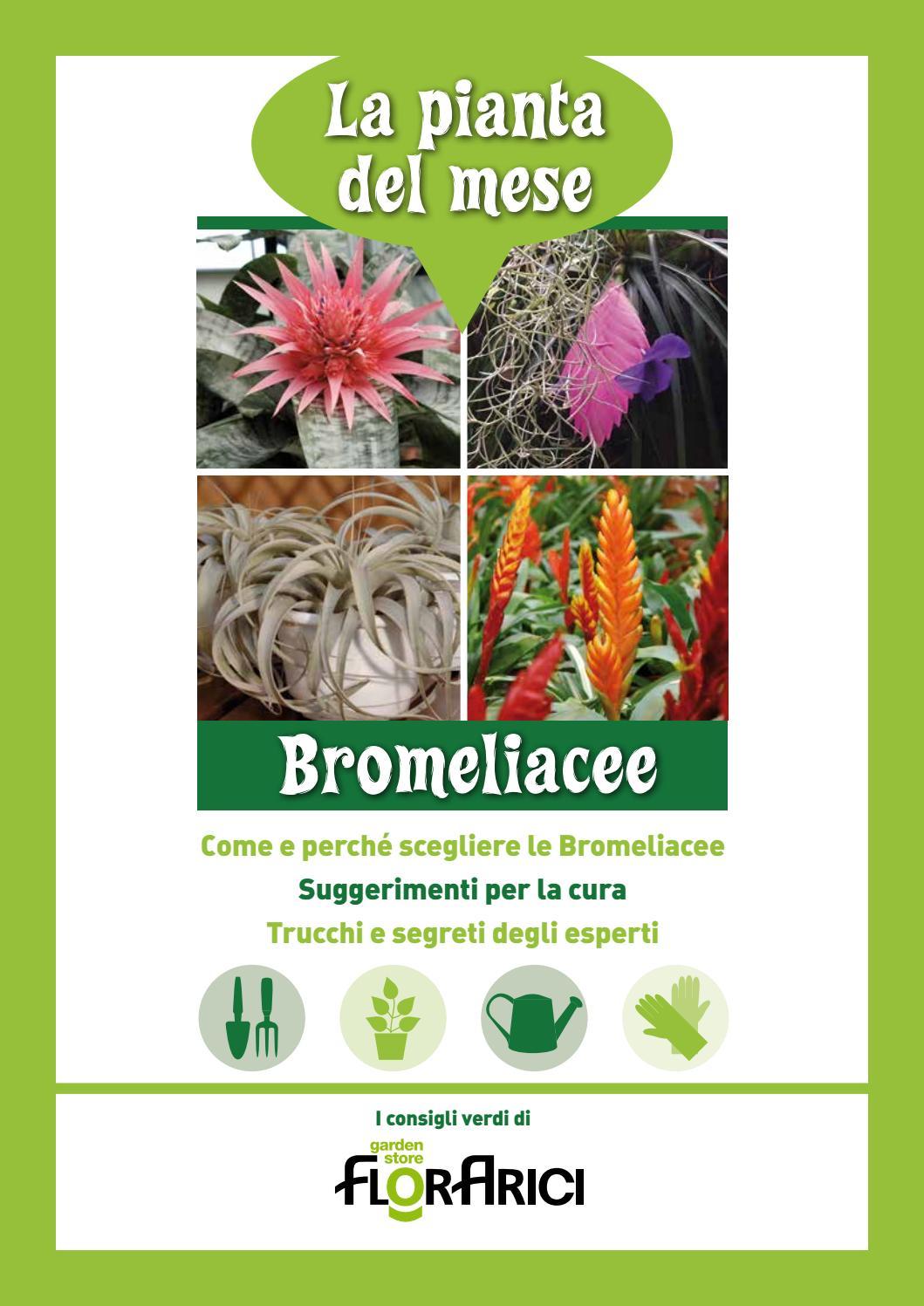 Piante Adatte Al Sole Diretto pianta del mese di novembre - bromeliacee by paolo arici - issuu