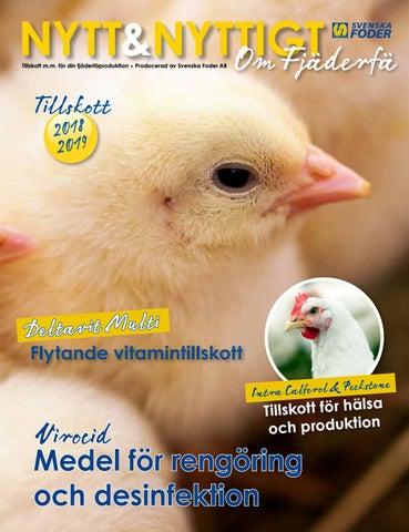 ansluta med feta kycklingar
