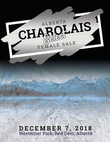 Alberta Select Charolais Female Sale