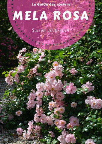 a5442d7b3949 Catalogue Mela Rosa 2018-2019 by Mela Rosa - issuu