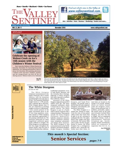 The Valley Sentinel November 2018 by Sentinel Newspapers - issuu 4f339e1c1a9