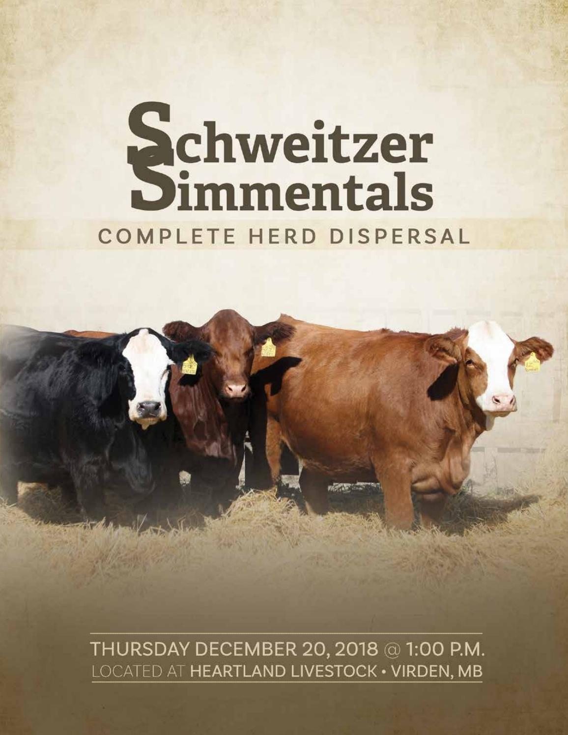 a0a0f216ceddd Schweitzer Simmentals Complete Herd Dispersal by Keltey Whelan Designs -  issuu