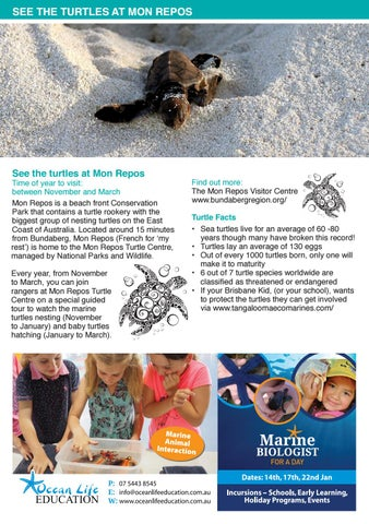 Page 6 of See Turtles Being Born and Hatching!
