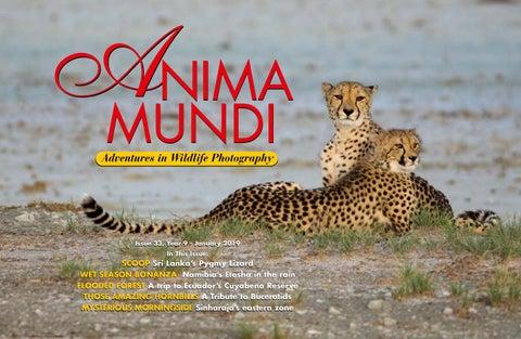 Issue 34   Anima Mundi Magazine