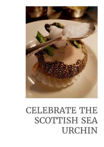 Page 45 of Celebrate the Scottish Sea Urchin