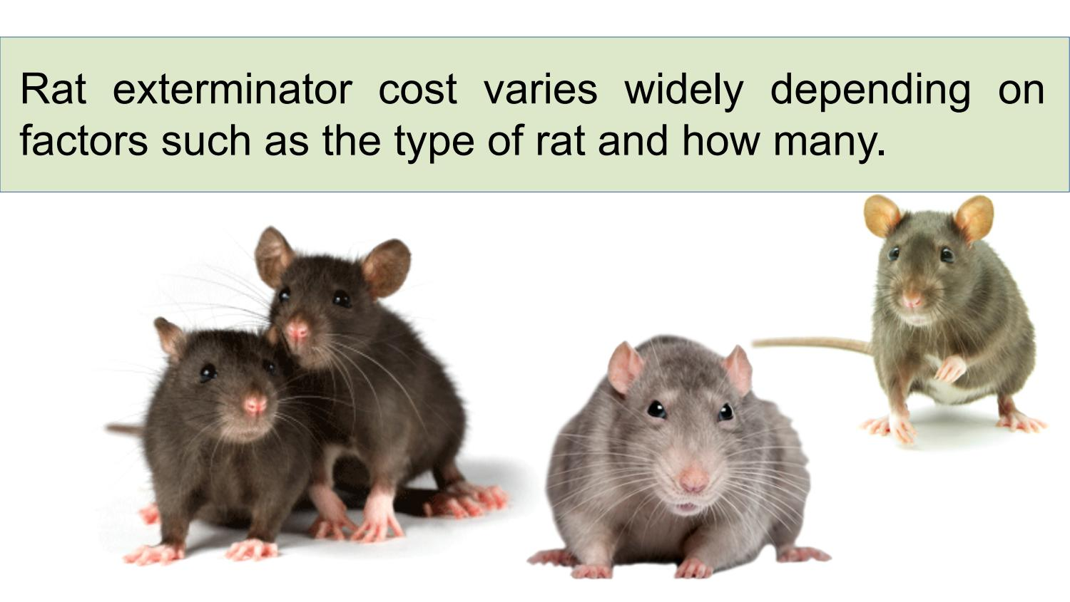 How Much Do Rat Control Services Cost by Atlanta Rat Removal