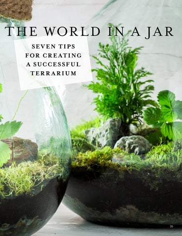 Page 35 of The World in a Jar: 7 Tips for Creating a Successful Terrarium