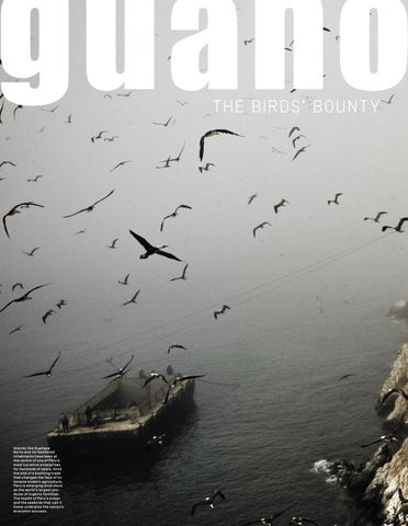 Page 18 of Guano: The bird's bounty