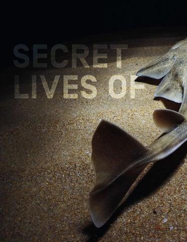 Page 36 of Secret Lives of Angelsharks