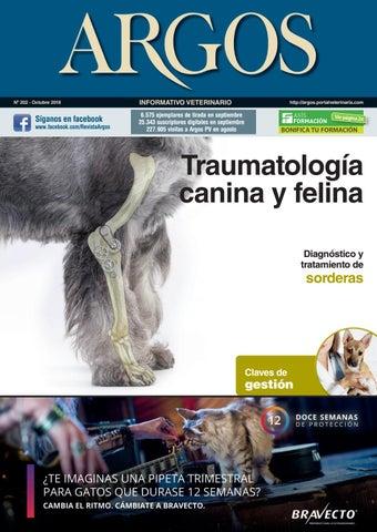 bloqueo nervio maxilar en perros