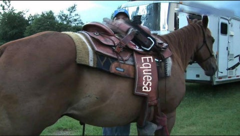 54ee6295c5b6 Does saddle really required for horse Racing and Training