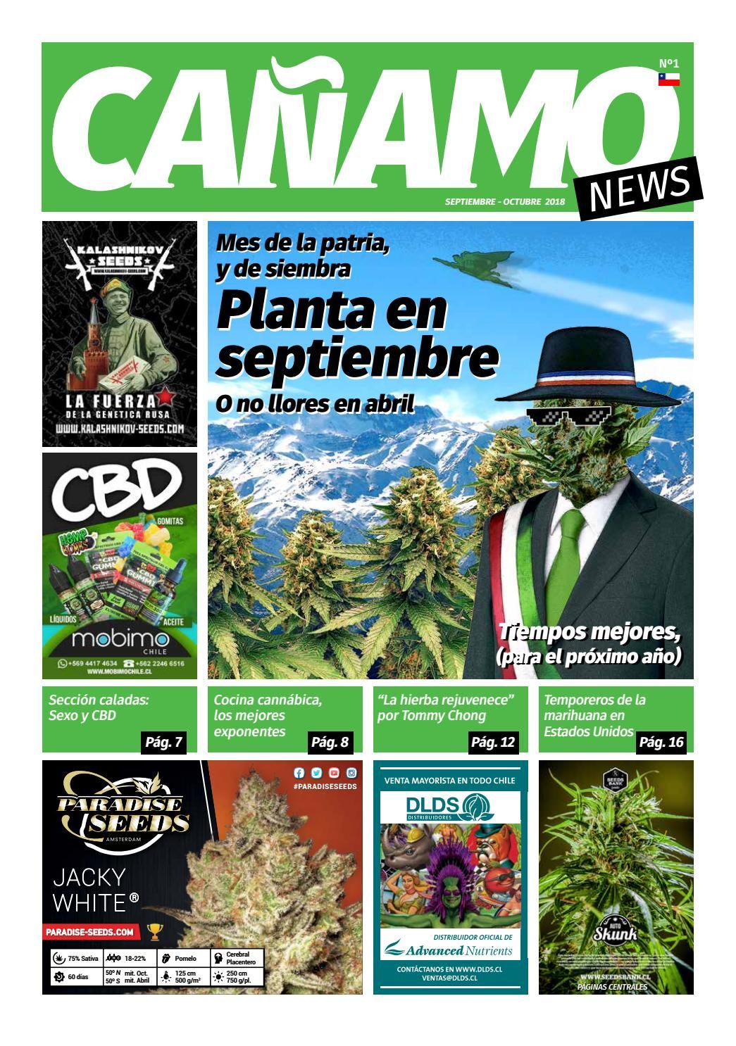 b69856cdf Cañamo News Nº1 - Septiembre/Octubre 2018 by Cañamo News / Weeds Chile -  issuu