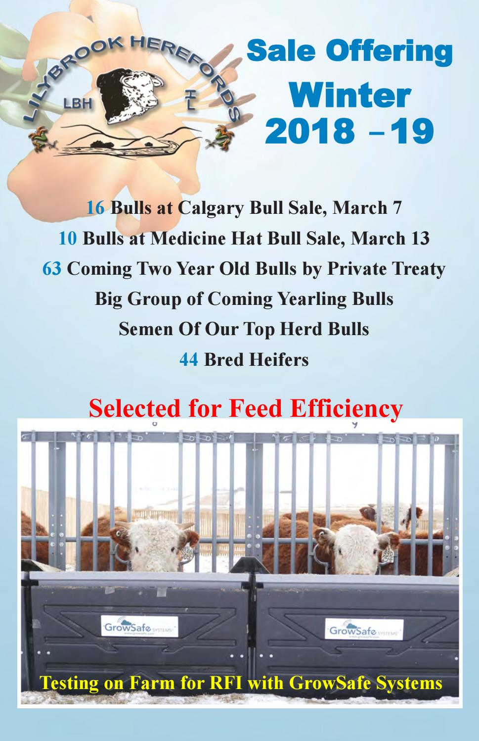 0ffe4627cfcfd1 Lilybrook Herefords Sale Offering Winter 2018-2019 by Canadian ...