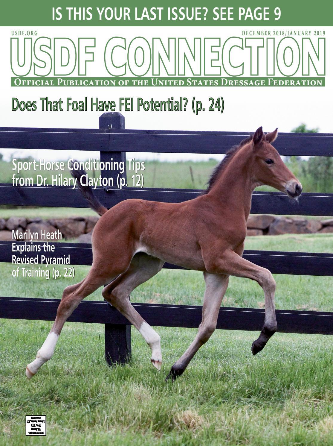 Green Wonder Wish lightweight Premium Profile Horse Stirrups P