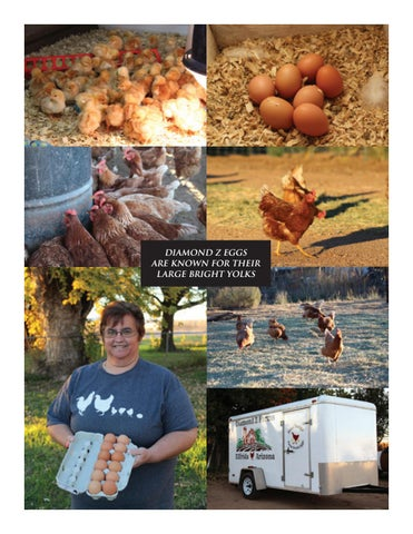 Page 11 of Free Range Eggs