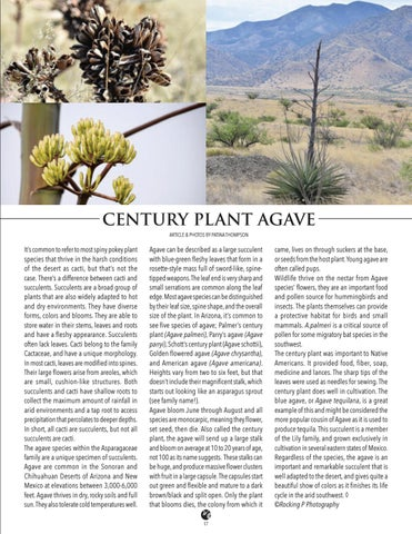 Page 17 of Century Plant Agave