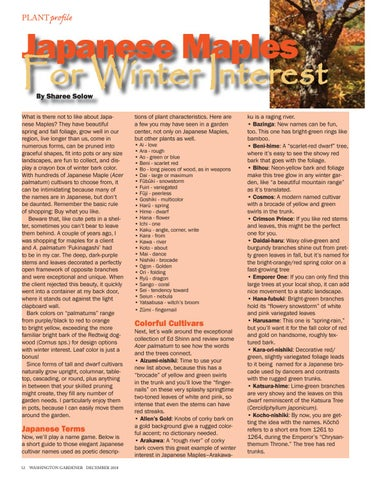 Page 12 of Japanese Maples For Winter Interest