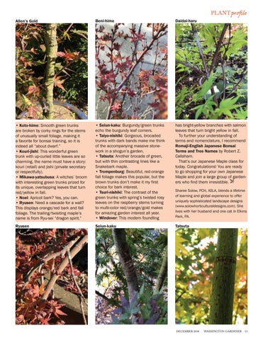 Page 13 of Japanese Maples For Winter Interest