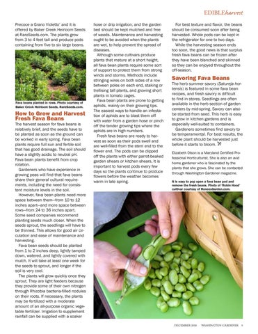 Page 9 of Fabulous Fresh Fava Beans