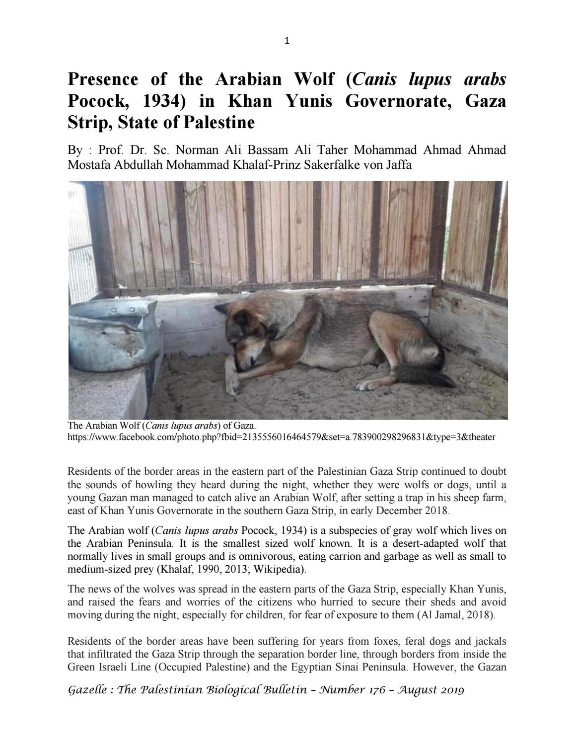 Presence Of The Arabian Wolf Canis Lupus Arabs In Khan Yunis