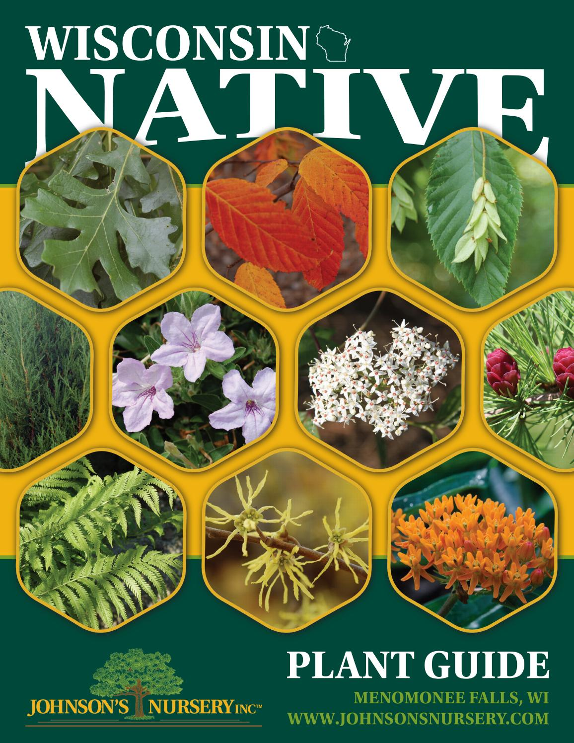 Wisconsin Native Plant Guide By Johnson