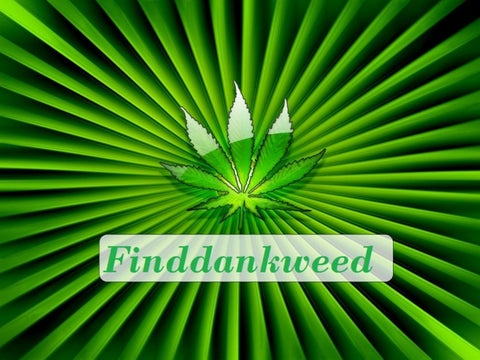 Medical and Recreational Marijuana Dispensary - Finddankweed
