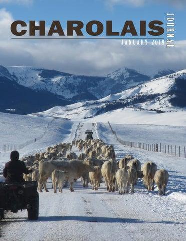 American Charolais Journal - January 2019 by EDJE - issuu