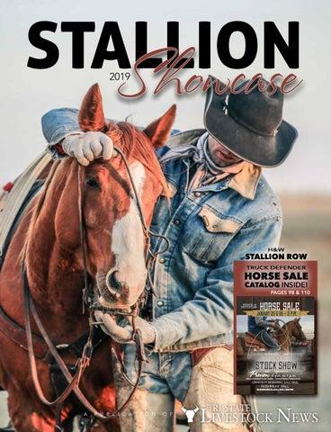 56daf8a2ebebe Stallion Showcase   Black Hills Stock Show Horse Sale Catalog by Tri ...