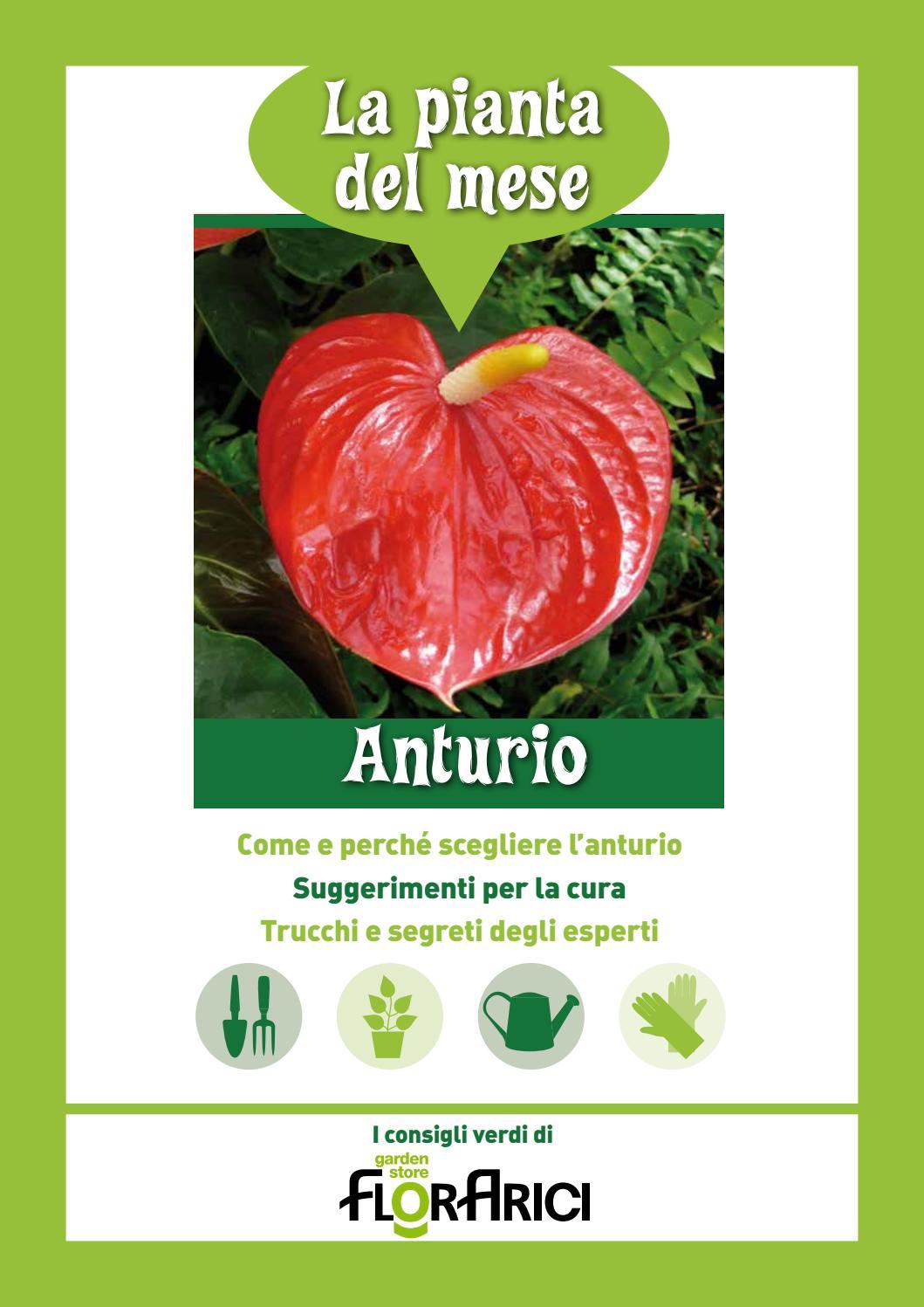 Anthurium Cura Della Pianta pianta del mese di gennaio 2019: anthurium by paolo arici