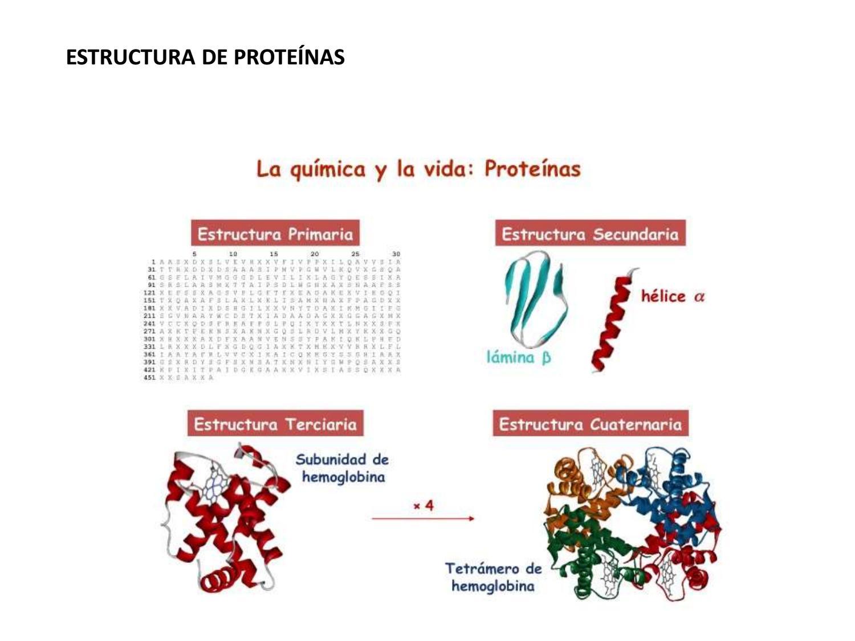 Estructura De Proteínas By Lino Issuu