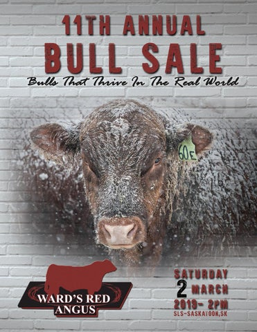 Ward's Red Angus Annual Bull Sale by Today's Publishing Inc  - issuu