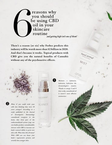 Page 22 of Six Reasons Reasons Why You Should be Using CBD Oil in your Skincare Routine