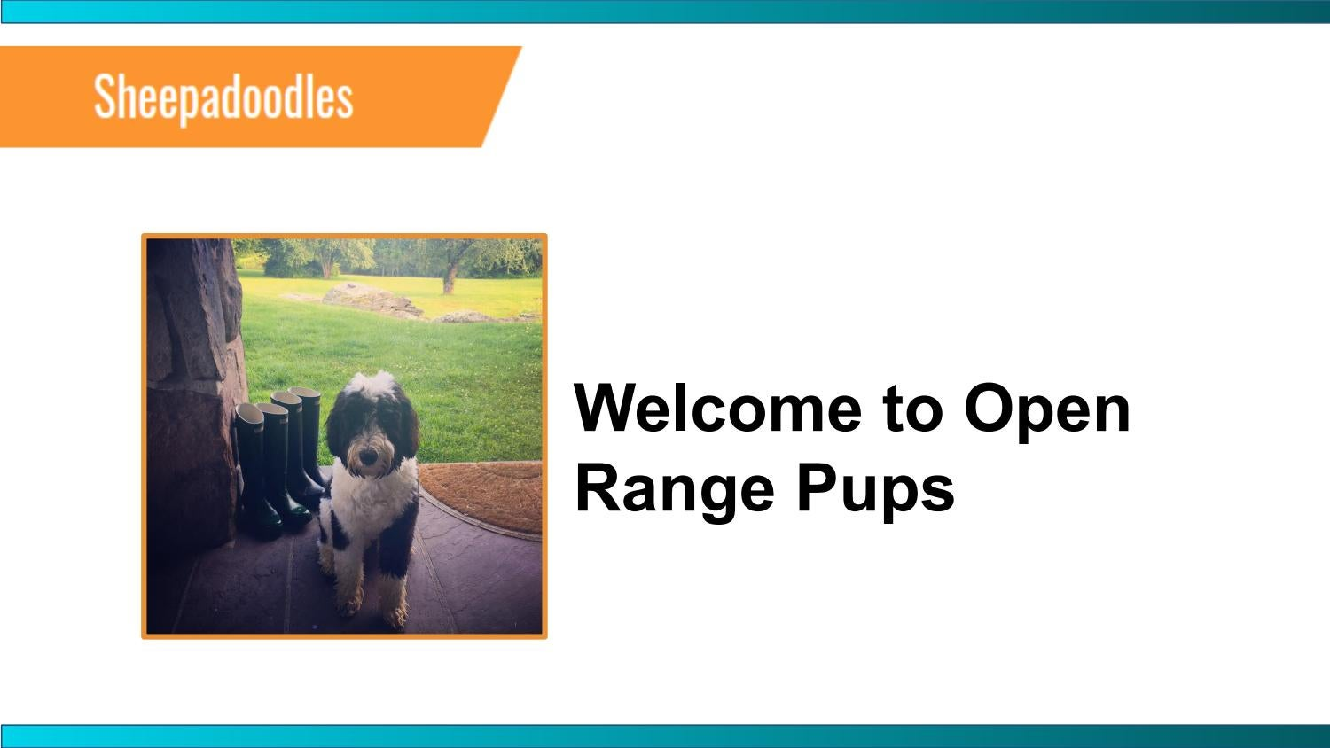 F1 Mini Sheepadoodle for Sale in Eckert | Open Range Pups by