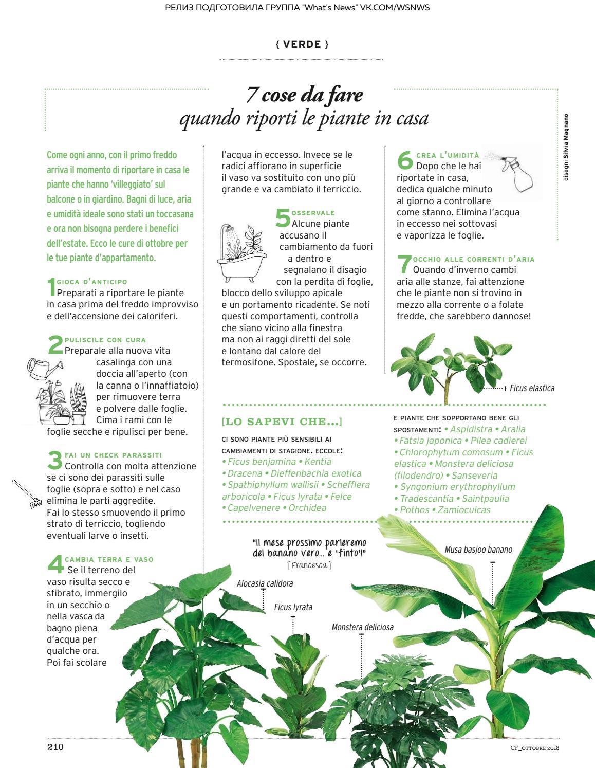 Ficus Benjamin Perde Foglie gahahhhahabha by elloco2019 - issuu