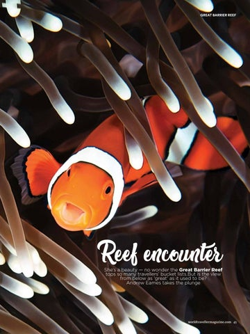 Page 47 of Reef Encounter