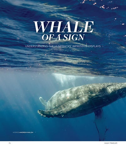 Page 72 of Whale of a Sign