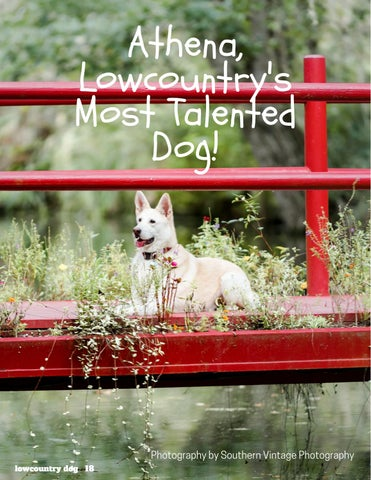 Page 18 of Athena, Lowcountry's Most Talented Dog