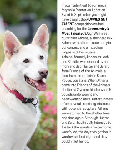 Page 19 of Athena, Lowcountry's Most Talented Dog