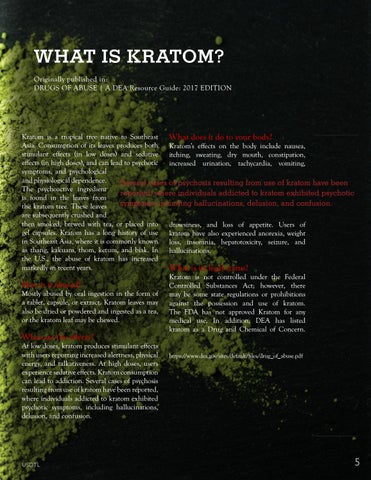 Page 5 of What is Kratom?