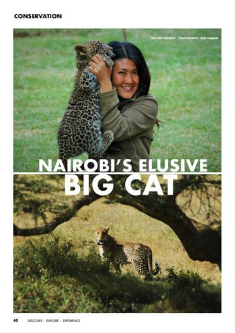 Page 42 of Nairobi's Elusive Big Cat