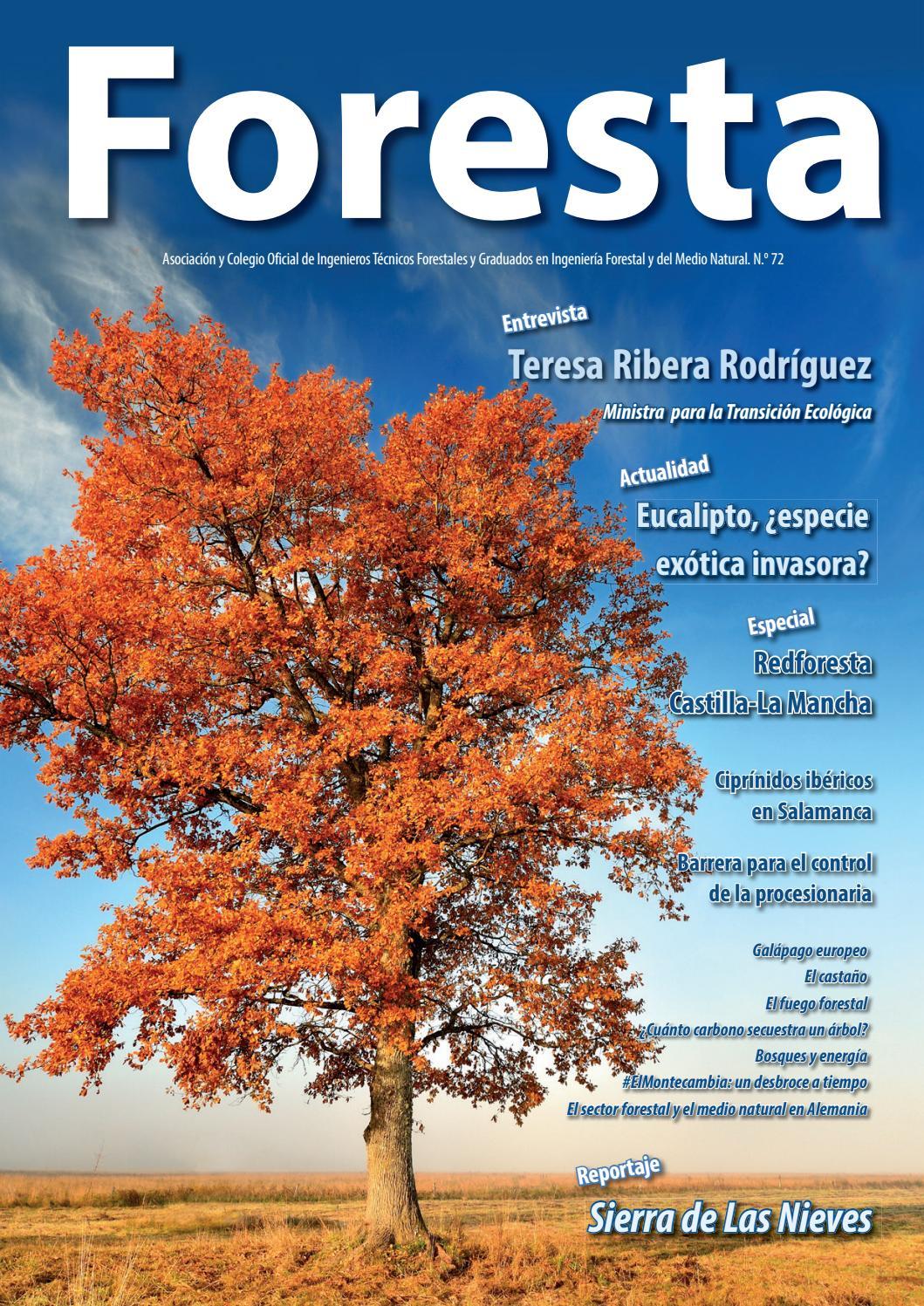 Revista Foresta nº 72 by Foresta - issuu f93d145772b