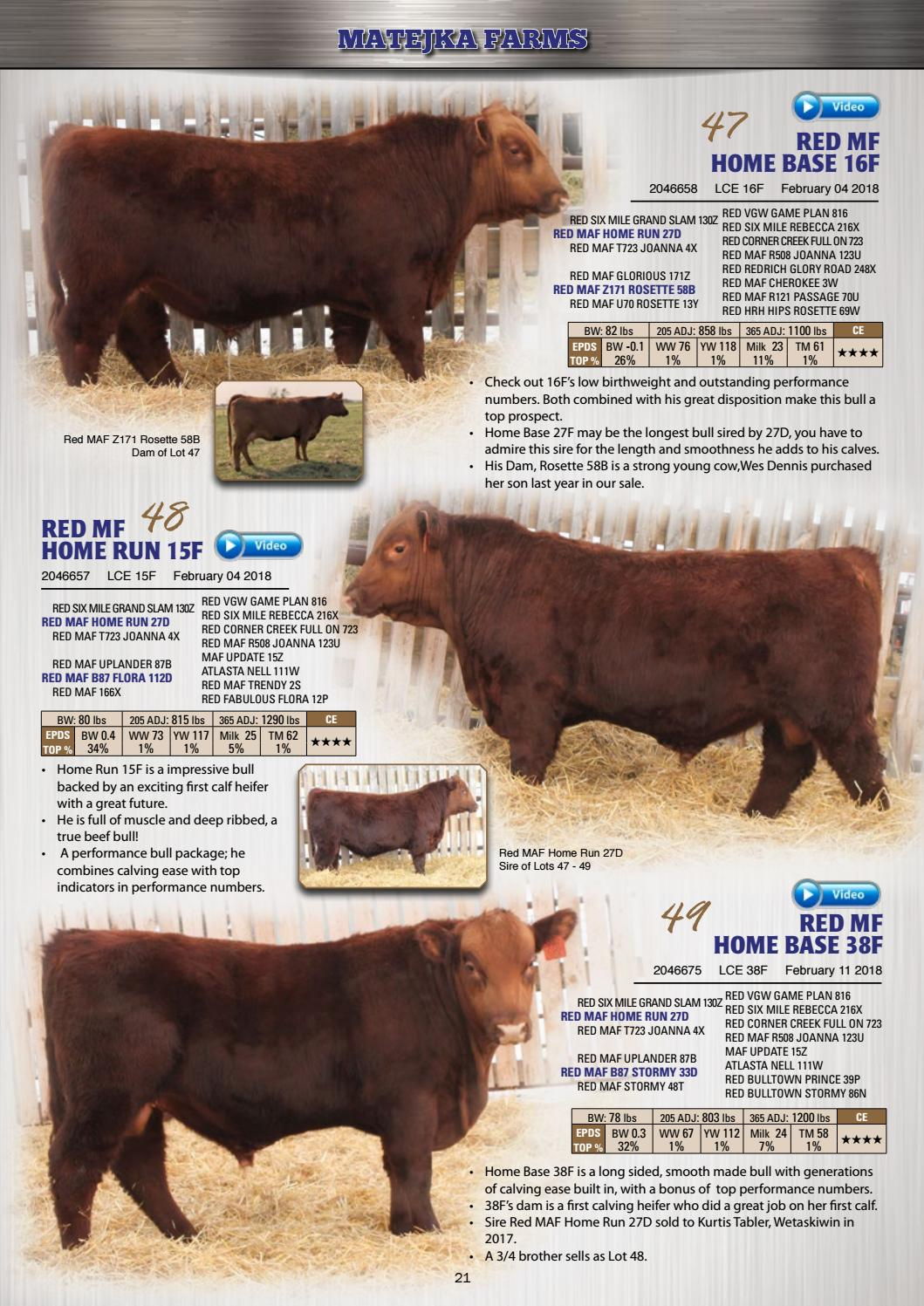 Cutting Edge Angus Bull Sale 2019 by The Big Picture of